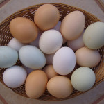 Difference Between White Eggs and Brown Eggs