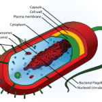 Difference Between Prokaryotes and Eukaryotes