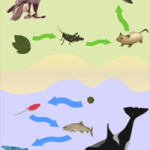 Difference Between the Food Chain and the Food Web