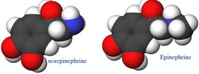 epinophrine