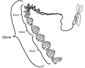 Difference Between DNA and Genes | Difference Between