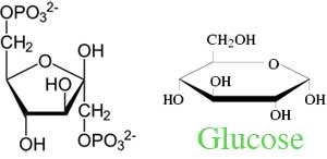 glucose_fructose
