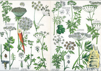 Difference Between Herbs And Shrubs