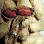 Difference Between Groundnut and Peanut