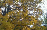autumn_spring