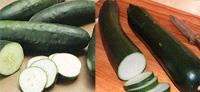 cucumber_zucchini