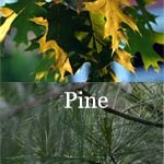 Difference Between Oak and Pine