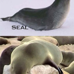 Difference Between Seals and Sea Lions