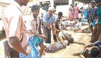 tamil-genocide4
