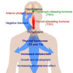 Difference Between Hypothyroidism and Hyperthyroidism