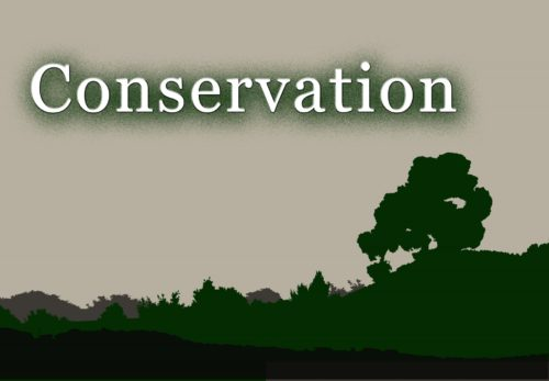 Difference Between Conservation and Preservation
