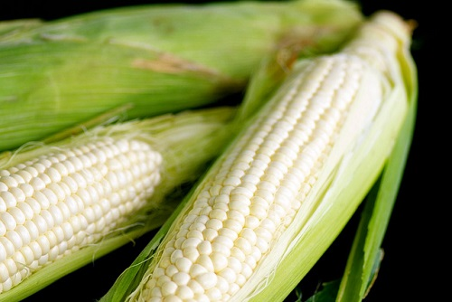 Difference Between White and Yellow Corn