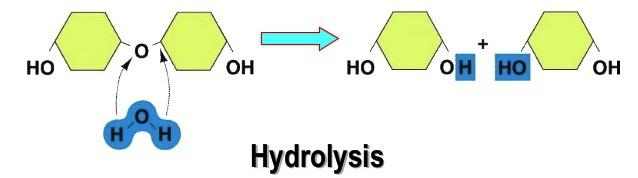 dehydration synthesis equation
