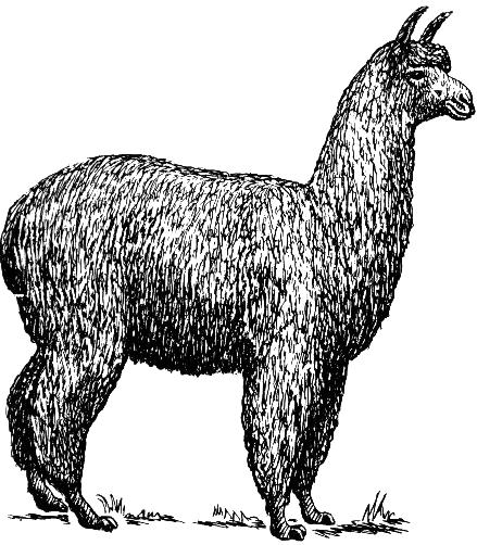 Alpaca_(PSF)