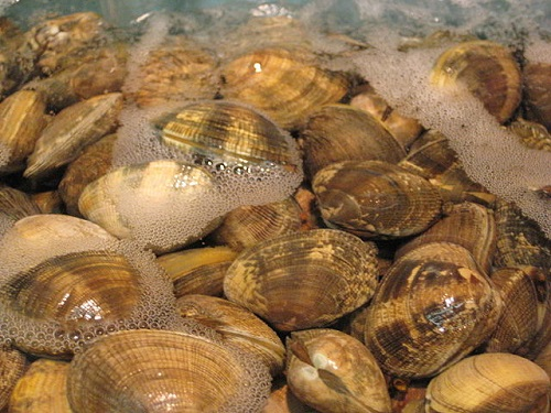 Difference Between Mussels And Clams Difference Between