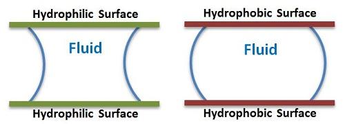 define hydrophilic in biology