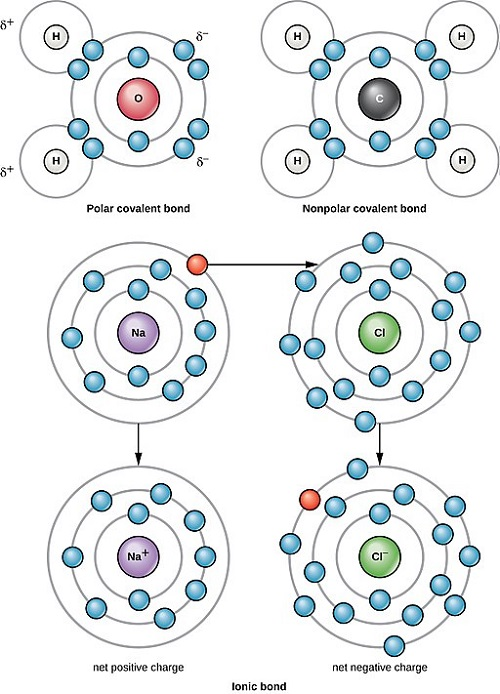 Difference Between Non-Polar and Polar Covalent Bonds
