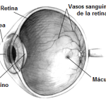 Difference Between ocular hypertension and glaucoma