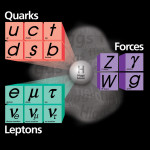 Differences between Leptons and Quarks