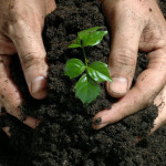 Differences between organic and inorganic fertilizers