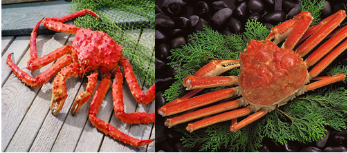 Difference Between King Crab And Snow Crab Difference Between