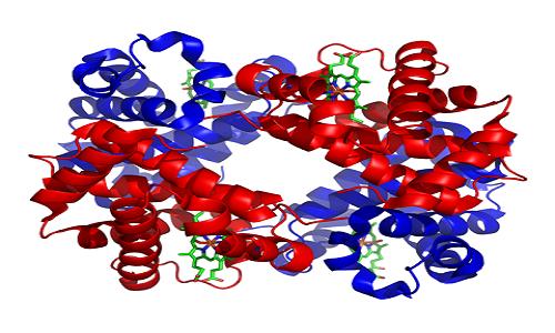 480px-1GZX_Haemoglobin