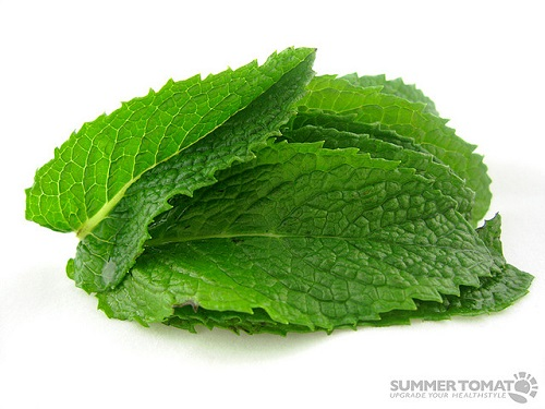 difference between peppermint and mint difference between