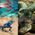 Difference Between Reptiles and Mammals