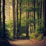 woods-945405_640