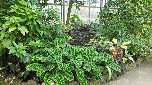 640px-plants_conservatory