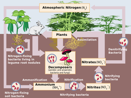 DIFFERENCE BETWEEN NITRIFICATION AND DENITRIFICATION