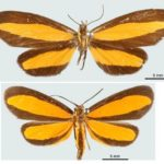 The Difference between Batesian and Mullerian mimicry