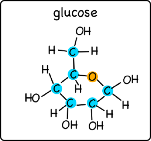 difference between xylose and glucose