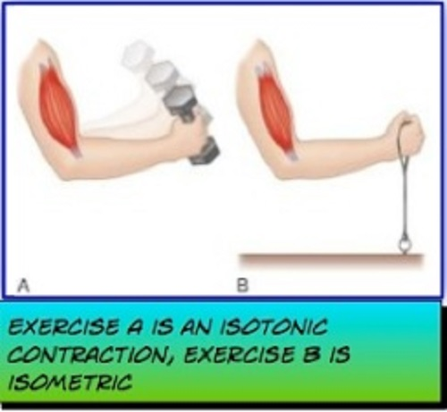 Difference between isometric and isotonic contractions