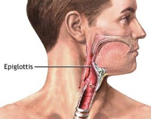 Difference between uvula and epiglottis-1