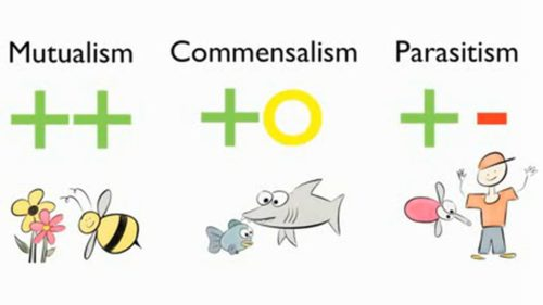 Difference between mutualism and commensalism