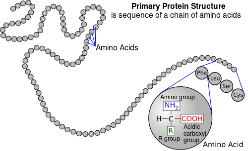 Difference Between Polypeptide and Protein