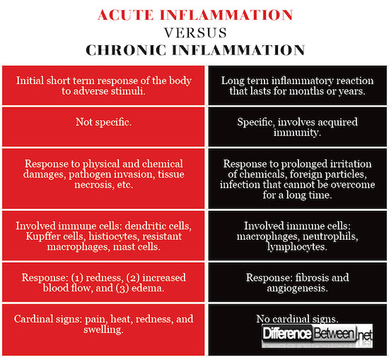 Difference Between Acute Inflammation and Chronic