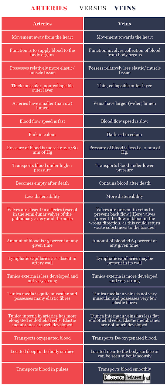 Arteries VERSUS Veins