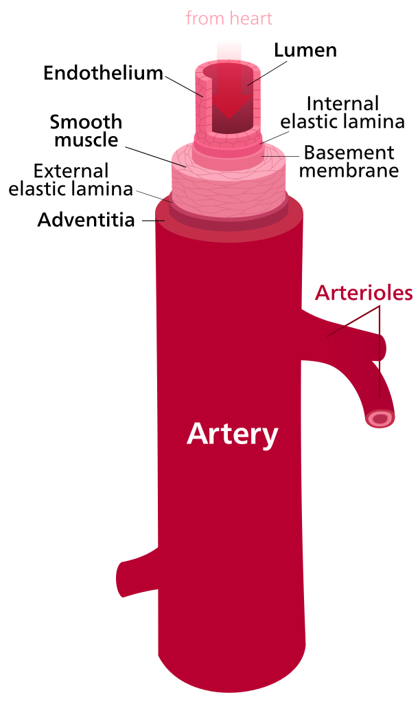 Difference Between Artery And Vein Difference Between