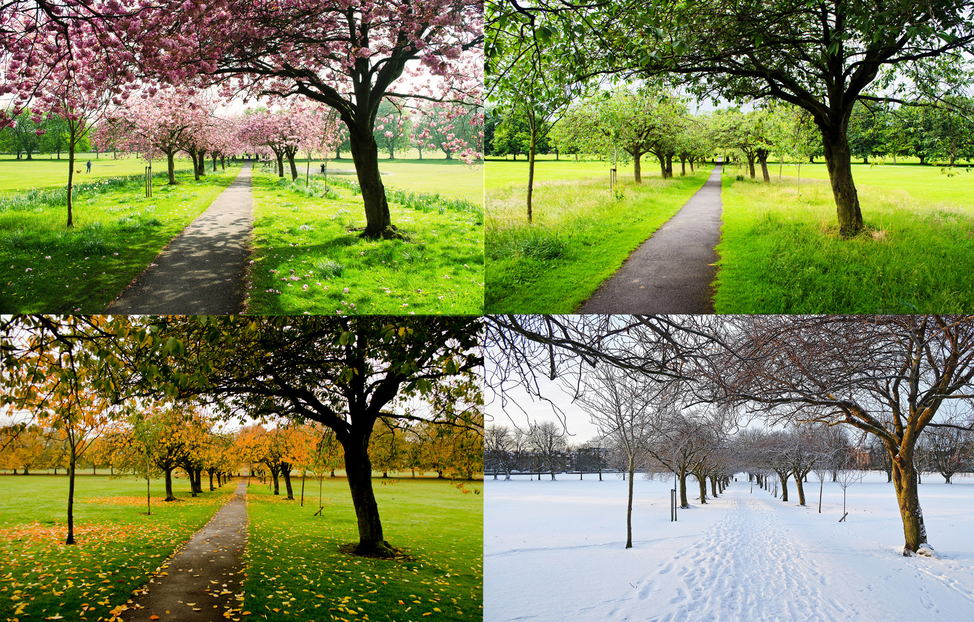 Difference Between Season and Weather