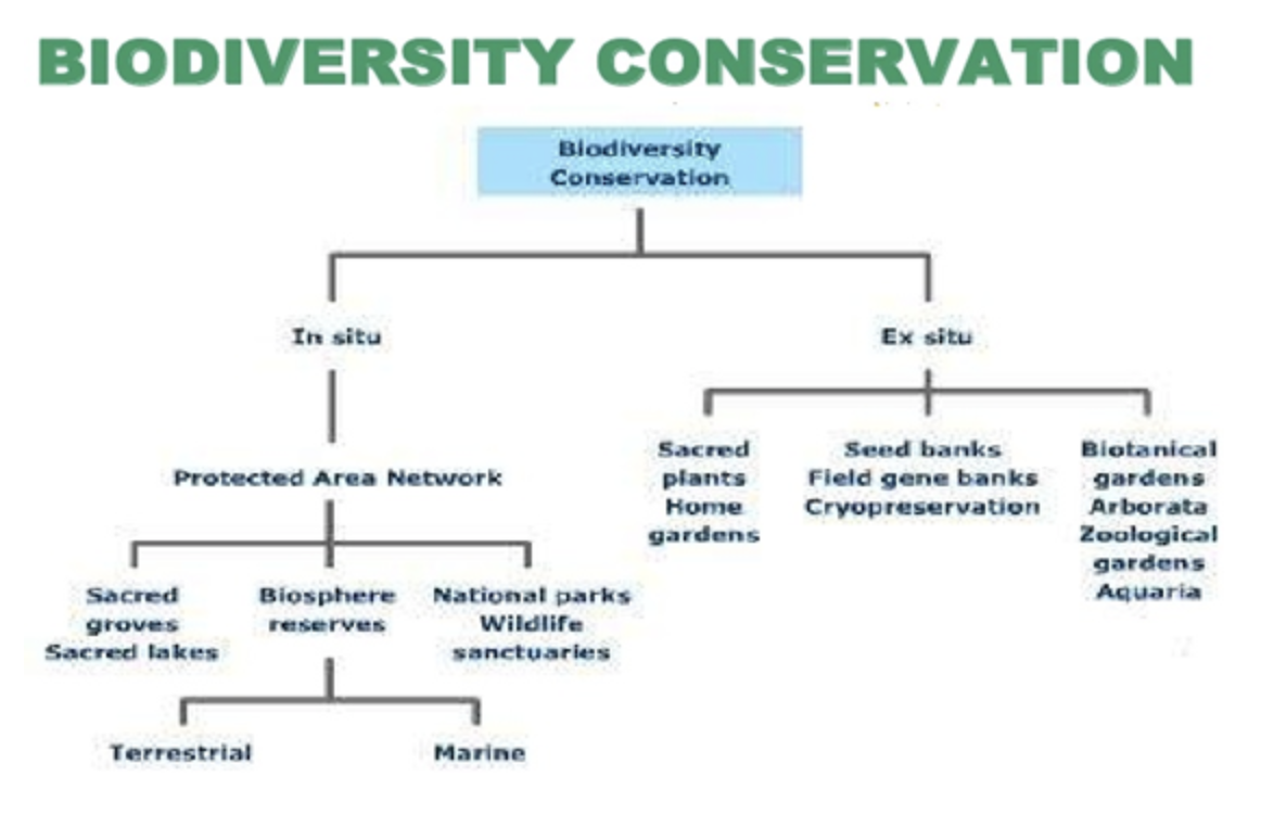 essay on biodiversity and conservation wikipedia