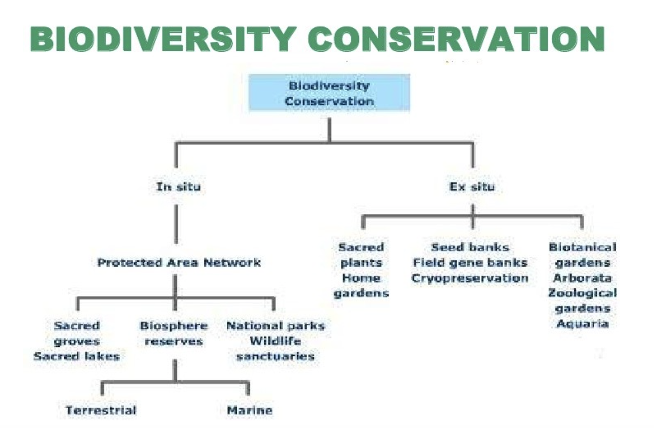 Difference between in Situ and Ex Situ Conservation2