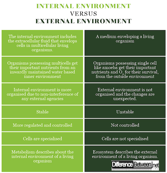internal and external environment External environment analysis is important in determining the strategy that should be adopted by a business and internal environment analysis is critical to identify the core competencies of the business.