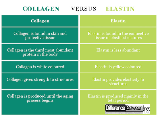 Collagen VERSUS Elastin