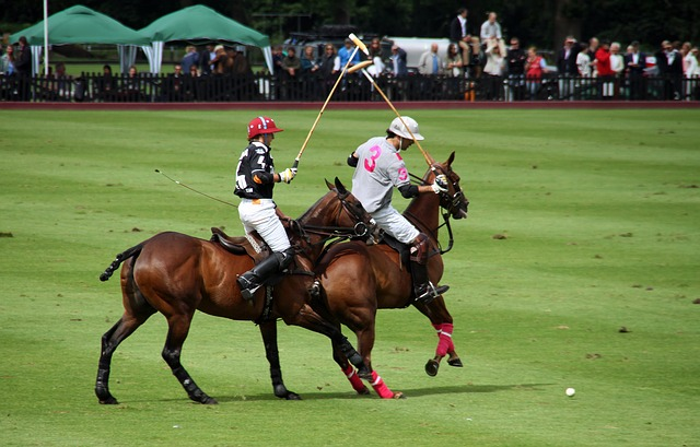 Players Polo Horses Competition