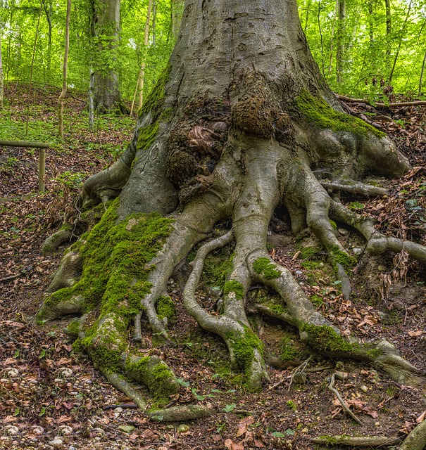 Difference Between Root and Stem