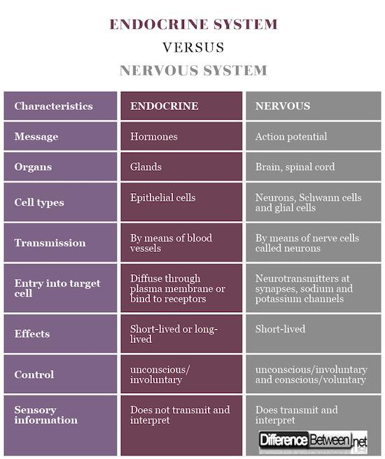 Endocrine System VERSUS Nervous System