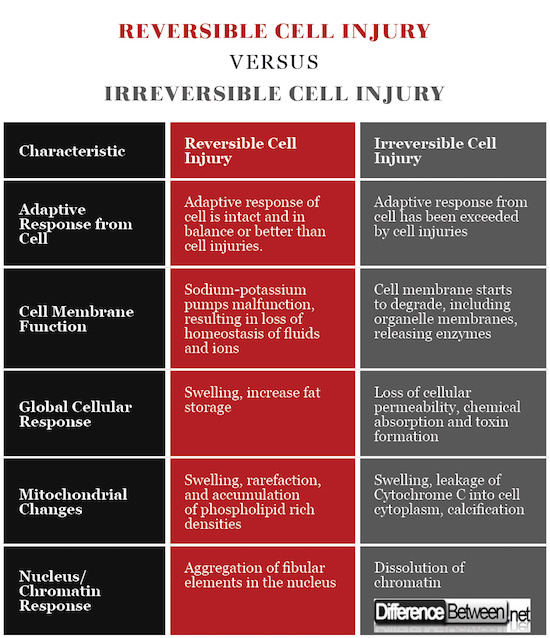 Difference Between Reversible and Irreversible Cell Injury