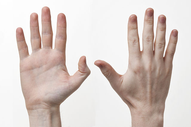 Difference Between Hand and Arm